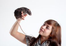 Rat on a hand Stock Photo