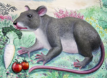 Rat High Relief and Wall Painting Royalty Free Stock Photography