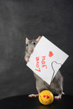 Rat with a love message. On holder Stock Image