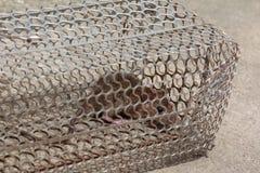 Rat met vrees in kooi wordt gevangen die stock afbeelding