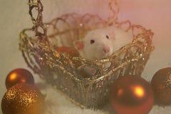 Rat mignon posant dans un panier d'or Images stock