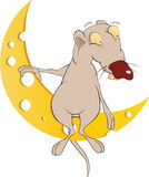 Rat and the moon Stock Photography