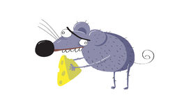 Rat or mouse just stole a piece of cheese Stock Photography