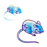 Rat, mouse - sketch, the drawing in color (watercolor 0) Royalty Free Stock Photos