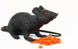 Rat noir avec des drogues Photos stock