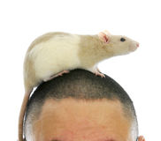 Rat on person's head Royalty Free Stock Images
