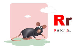 Rat pet animal with alphabet Royalty Free Stock Photography