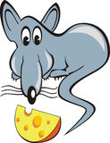 Rat & piece of cheese. Funny rat (mouse) and a piece of cheese
