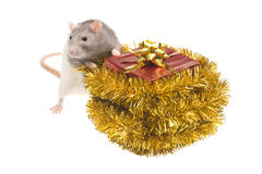 Rat and present with gold bow Stock Photography