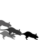 Rat race Royalty Free Stock Images