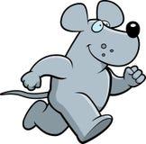Rat Running Royalty Free Stock Photo
