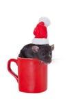 Rat Santa Claus Stock Photo