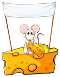 A rat sitting above the cheese with an empty banner above Stock Photo
