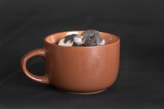 Rat sitting in a cup Royalty Free Stock Photos