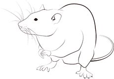 Rat sketch Royalty Free Stock Photo