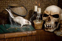 Rat and skull. Little white gerbil rat visiting a halloween skull Royalty Free Stock Photos