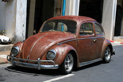 Rat style beetle Royalty Free Stock Photography