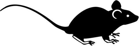 Rat. Stylized illustration of a rat Stock Photos