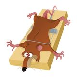 Rat in trap Stock Photography