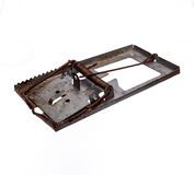 Rat trap on white background Stock Image