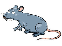 Rat. Vector illustration of cartoon Rat Stock Image