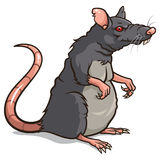 Rat. Vector illustration of a Rat isolated on a white background Stock Photos