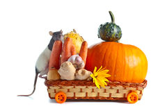 Rat and vegetables Stock Image