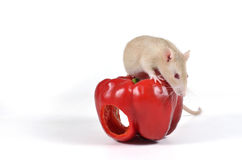 Rat and vegetables. Royalty Free Stock Image