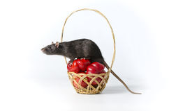 Rat and vegetables. Stock Photography