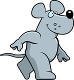 Rat Walking Stock Photos