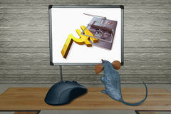 Rat watching Computer Screen with mouse. Concept Royalty Free Stock Photos