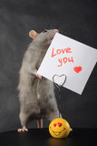 Rat whis love holder. Rat love next to a holder for the messages of pictures of love reports Royalty Free Stock Photography