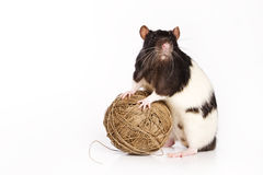 Rat on white background. With ball Stock Image