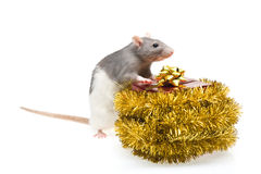 Rat with wrapped present Royalty Free Stock Images