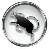 Rat Zodiac icon grey Royalty Free Stock Photos