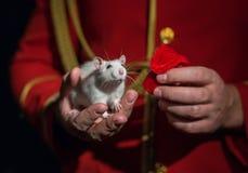 Rata blanca del laboratorio en su hand2 Foto de archivo