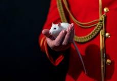 Rata blanca del laboratorio en su mano Foto de archivo libre de regalías