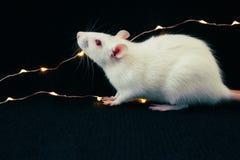 Rata blanca en fondo negro con la guirnalda