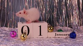Rata blanca que se sienta en el calendario de madera con las decoraciones de la Navidad, s?mbolo del A?o Nuevo 2020 almacen de video