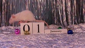 Rata blanca que se sienta en el calendario de madera con las decoraciones de la Navidad, s?mbolo del A?o Nuevo 2020 metrajes