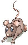 Rata de Brown Imagen de archivo libre de regalías