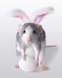 Rata de Pascua Fotos de archivo libres de regalías