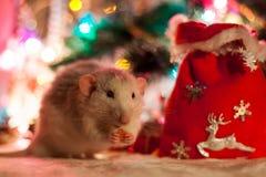 Rata decorativa en un fondo de las decoraciones de la Navidad Foto de archivo