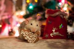 Rata decorativa en un fondo de las decoraciones de la Navidad Imagen de archivo