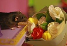 Rata decorativa negra y un ramo de flores de la primavera fotos de archivo