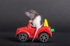 Rata del bebé en el coche del juguete Foto de archivo libre de regalías