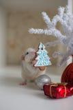 Rata divertida linda en un fondo de las decoraciones de la Navidad Fotografía de archivo