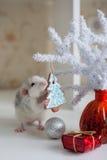 Rata divertida linda en un fondo de las decoraciones de la Navidad Fotografía de archivo libre de regalías