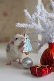 Rata divertida linda en un fondo de las decoraciones de la Navidad Imagen de archivo