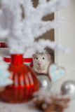 Rata divertida linda en un fondo de las decoraciones de la Navidad Imágenes de archivo libres de regalías